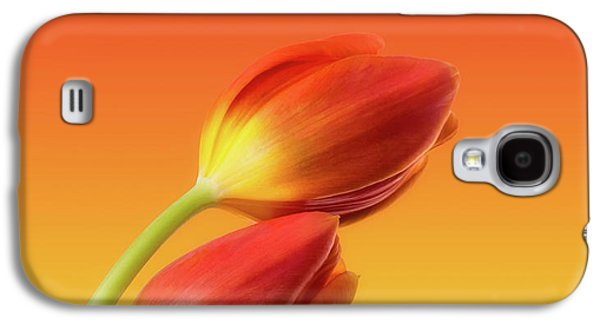 Colorful Tulips Galaxy S4 Case