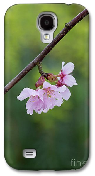 Columnar Sargent Cherry Blossom Galaxy S4 Case