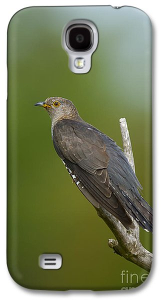 Common Cuckoo Galaxy S4 Case by Steen Drozd Lund