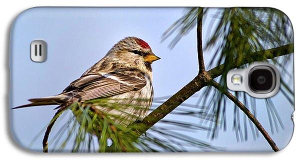 Common Redpoll Bird Galaxy S4 Case by Christina Rollo