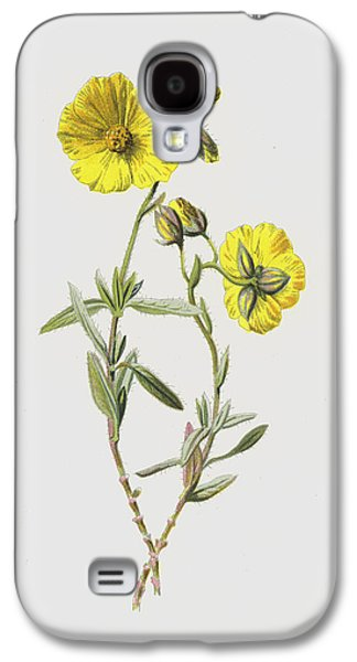 Common Rock Rose Galaxy S4 Case by Frederick Edward Hulme