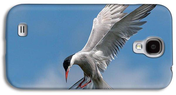 Common Tern  Galaxy S4 Case by Ian Hufton