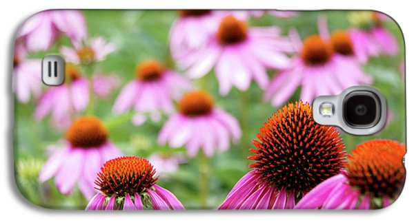 Coneflowers Galaxy S4 Case