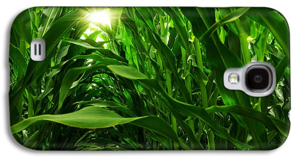 Sun Photographs Galaxy S4 Cases - Corn Field Galaxy S4 Case by Carlos Caetano