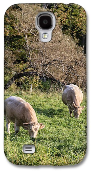 Cows Grazing In A Field Etna Nh Galaxy S4 Case by Edward Fielding