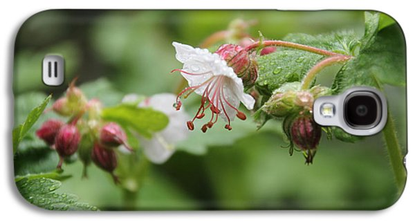 Cranesbill Raindrops Galaxy S4 Case