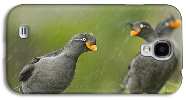 Crested Auklets Galaxy S4 Case