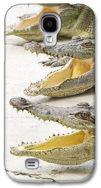 Crocodile Choir Galaxy S4 Case by Jorgo Photography - Wall Art Gallery