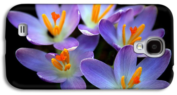 Galaxy S4 Case featuring the photograph Crocus Aglow by Jessica Jenney