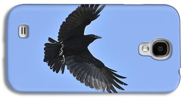 Crow In Flight Galaxy S4 Case