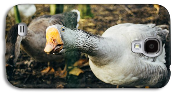 Curious Grey Goose Galaxy S4 Case by Pati Photography