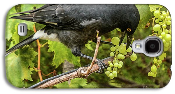 Currawong On A Vine Galaxy S4 Case