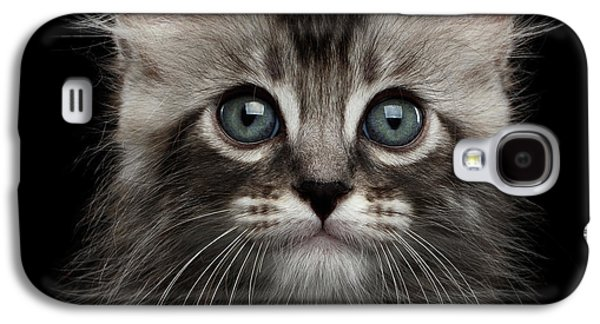 Cute American Curl Kitten With Twisted Ears Isolated Black Background Galaxy S4 Case by Sergey Taran
