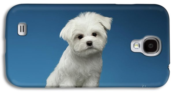 Cute Pure White Maltese Puppy Standing And Curiously Looking In Camera Isolated On Blue Background Galaxy S4 Case by Sergey Taran