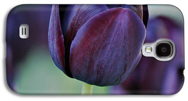 Indiana Flowers Galaxy S4 Cases - Dark Purple Tulip Galaxy S4 Case by Sandy Keeton