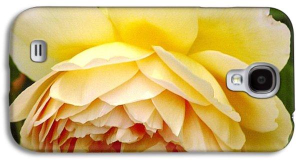 David Austin Rose Golden Celebration 2 Galaxy S4 Case by Rod Ismay