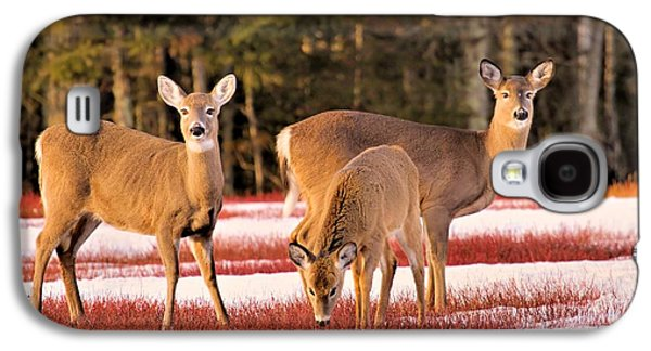 Deer In Snow Galaxy S4 Case