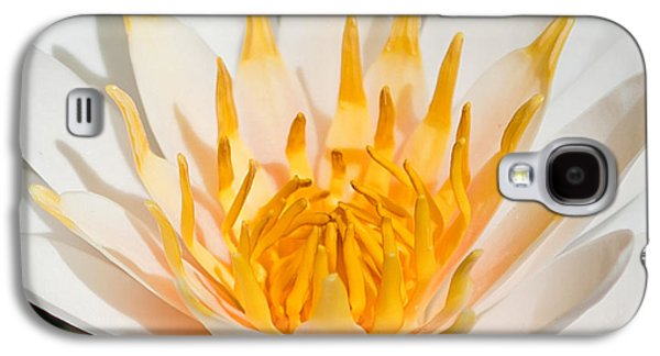 Delicate Touch Galaxy S4 Case