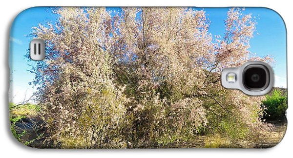 Desert Ironwood Tree In Bloom - Early Morning Galaxy S4 Case