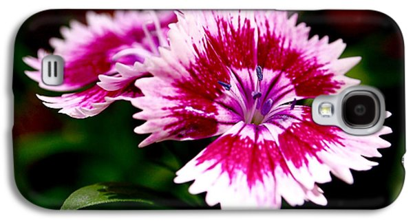 Dianthus Galaxy S4 Case by Rona Black