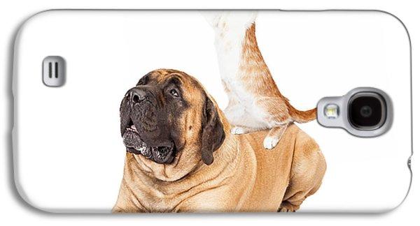 Dog Cat And Bird Playing Galaxy S4 Case by Susan Schmitz
