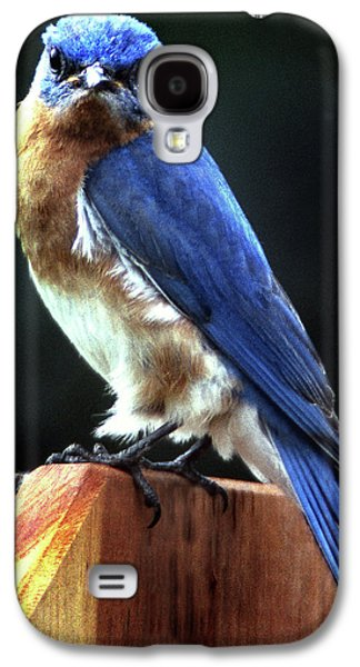 Photos Of Birds Galaxy S4 Cases - Dominator Galaxy S4 Case by Skip Willits