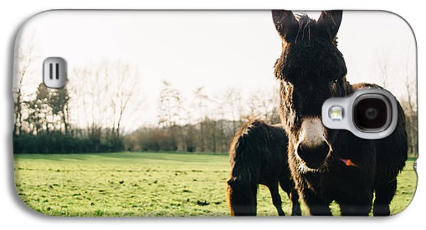Donkey And Pony Galaxy S4 Case by Pati Photography