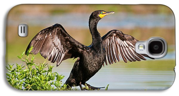 Double-crested Cormorant Galaxy S4 Case