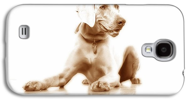 Lucky Dogs Galaxy S4 Cases - Down Galaxy S4 Case by Nancy Ingersoll