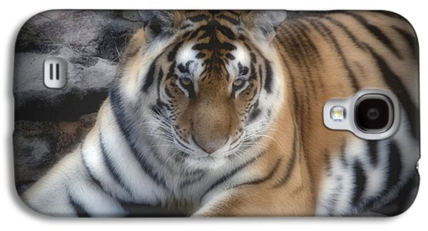 Animal Pyrography Galaxy S4 Cases - Dreamy Tiger Galaxy S4 Case by Sandy Keeton