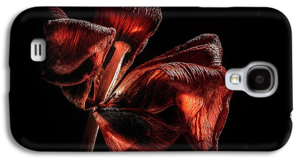 Tulip Galaxy S4 Case - Dried Tulip Blossom by Scott Norris