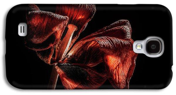 Tulip Galaxy S4 Case - Dried Tulip Blossom by Scott Norris