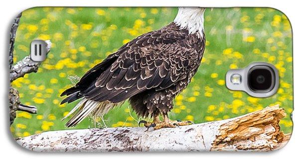 Eagle On A Log Galaxy S4 Case by Paul Freidlund