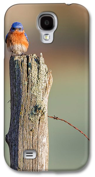 Eastern Bluebird Portrait Galaxy S4 Case