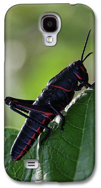 Eastern Lubber Grasshopper Galaxy S4 Case by Richard Rizzo