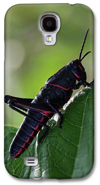 Eastern Lubber Grasshopper Galaxy S4 Case