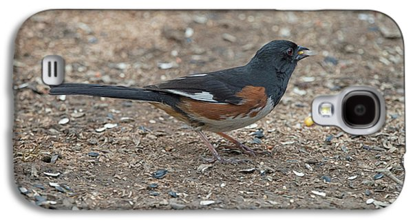 Eastern Towhees Are Birds Of The Undergrowth Galaxy S4 Case