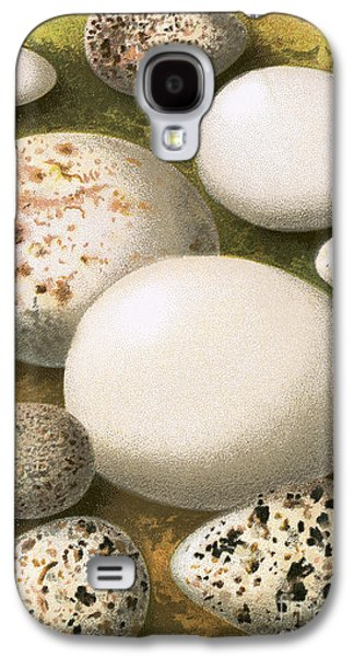 Sandpiper Galaxy S4 Case - Eggs by English School