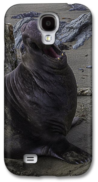Elephant Seal Calling Galaxy S4 Case by Garry Gay