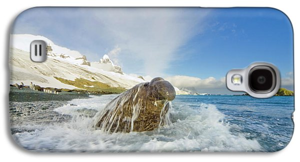Elephant Seal In The Surf Galaxy S4 Case by Yva Momatiuk and John Eastcott