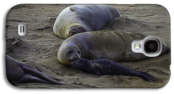 Elephant Seal Mom And Pup Galaxy S4 Case by Garry Gay