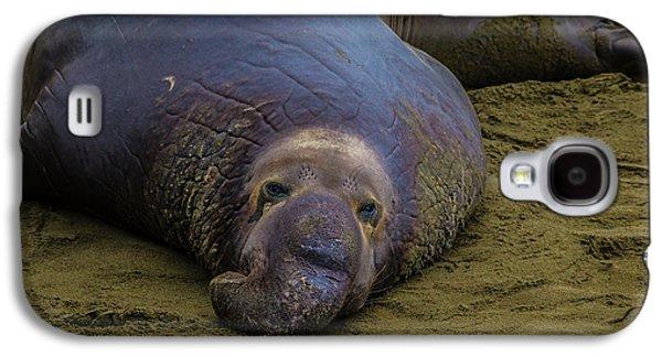 Elephant Seal Portrait Galaxy S4 Case