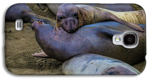 Elephant Seals Fighting Galaxy S4 Case
