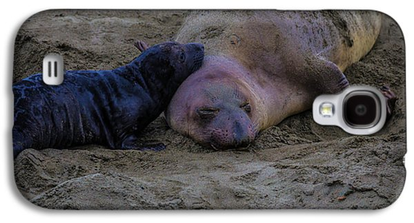Elephant Seals Mom And Pup Galaxy S4 Case