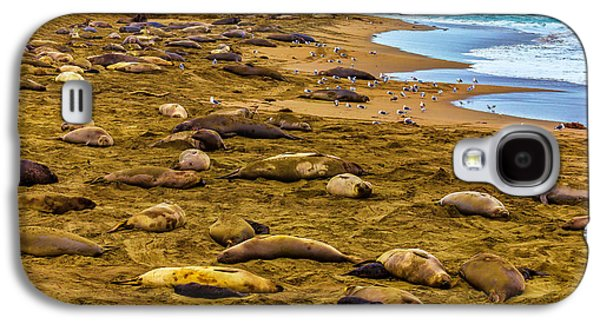 Elephant Seals Near Cambria  Galaxy S4 Case
