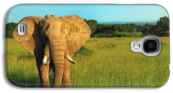 Animal Photographs Galaxy S4 Cases - Elephant Galaxy S4 Case by Sebastian Musial