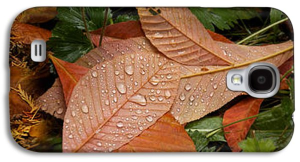 Elevated View Of Raindrops On Leaves Galaxy S4 Case