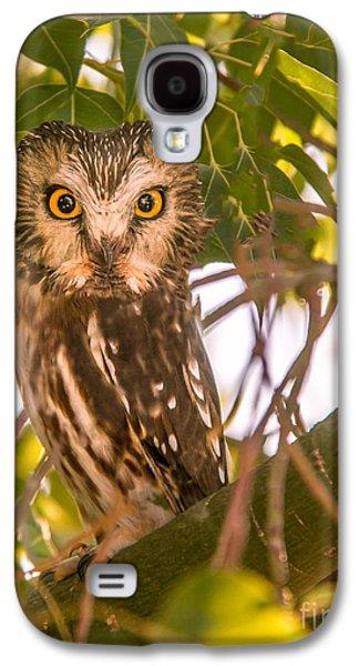 Elf Owl Galaxy S4 Case by Robert Bales