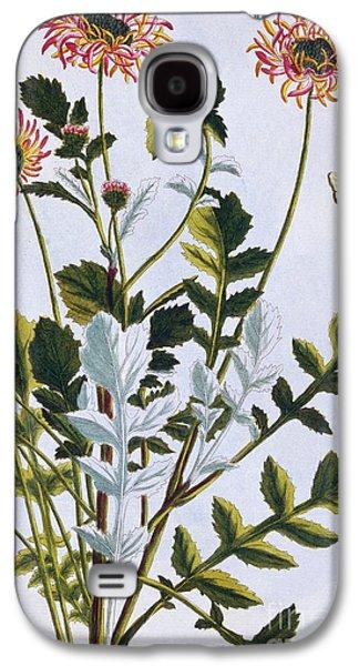Ethiopian Arcotis  African Lily Galaxy S4 Case by Pierre-Joseph Buchoz