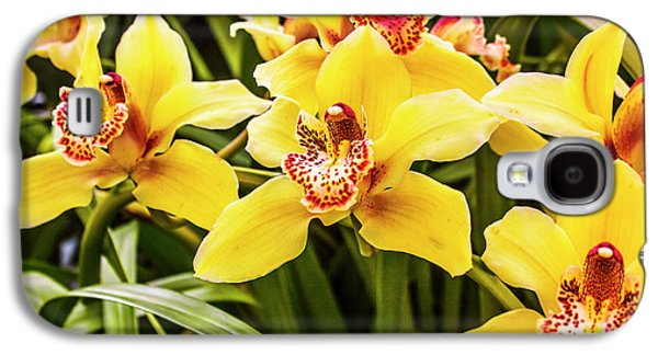 Orchid Galaxy S4 Case - Exotic Orchids  by Jorgo Photography - Wall Art Gallery